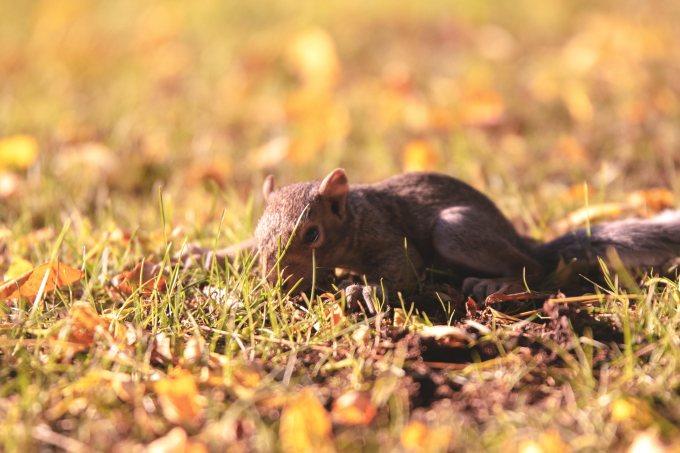 9/4/2018–Lost Baby Squirrel?