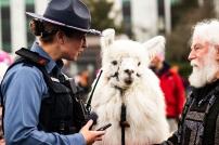 State Trooper, Mara Othic, meets No Drama Llama.