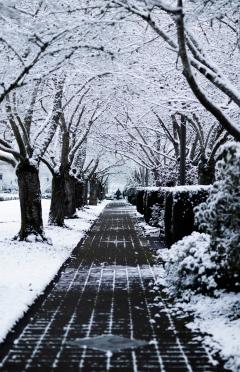Snowtrees